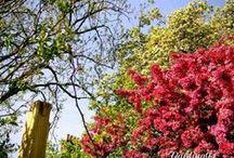MY ENGLISH GARDEN/MI JARDÍN INGLÉS / FOTOGRAFÍA/PHOTOGRAPHY