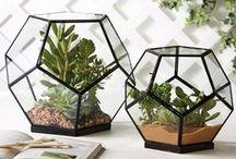 terrariums / Terrariums, mini gardens and creative houseplant displays.