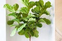 <Plants>