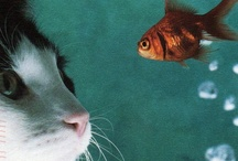 Just Sweet Animals / by Elise Giannini