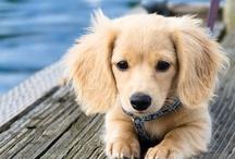 Pups / by Jennifer Robertson