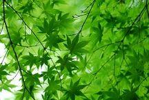 green / by Rachel Pryer