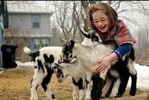 Urban Farm Critters