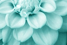 Teal Teal Teal / #teal #pantone #color #paint