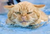CATS AKA PUDDYTATS