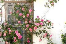 My Secret Garden / by Melissa Price