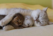 MAMA OR PAPA KITTYS & OR FRIENDS  & KITTENS