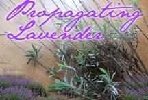 Herb garden / by Denise Thomason