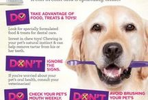 Dental Health for Your Pets / This board is for promoting dental health for pets!