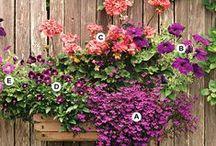 Yard n Flower Garden Ideas / by Tammy Reynolds-Rice