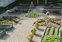 Garden / Garden Ideas, Tips, and Photos