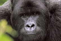 Beautiful Creations ~ Apes/Monkeys