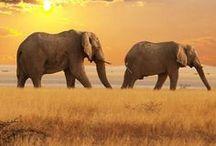 Beautiful Creations ~ Elephants