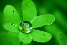 Life lived in color ~ Green
