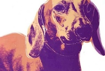 Beautiful Dachshunds / by Jamie Dunham