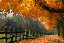 Autumn / We love Autumn!  Our favorite fall scenes for the harvest season...