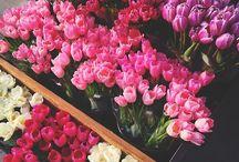 { Photography | Botanical }