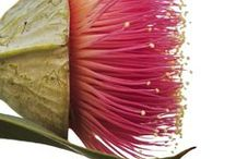 Class inspiration - Australian flowers / Proteas and australian native photography