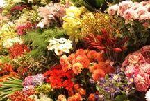 bloemen / flowers / fleurs / all kind of flowers
