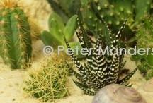 plants / planten / plants & plants decoration