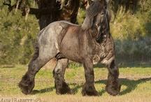 Draft Horses / by Bev Flowers Williams