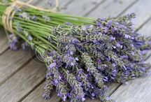 Fresh Lavender Wedding Inspiration / This board is devoted to any couples dreaming of having fresh Lavender at their wedding!