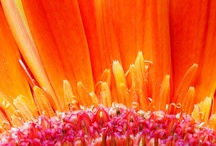 Orange Dream / What a fresh and cheerful color!