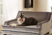 Home Decor for pets / by HomeGardenDirectory .com