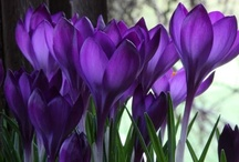 Flower Inspiration / by HomeGardenDirectory .com