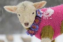 Knit it ! / by Cherie Bandal