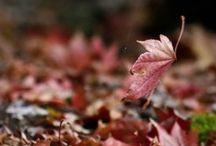 Beautiful Fall / My favorite all time season FALL!