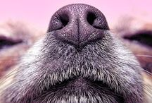 Dogs in the News / Great stories featuring our furry friends!