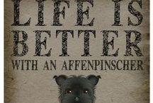 Affenpinscher Dog Lover / Everything you love about the Affenpinscher!