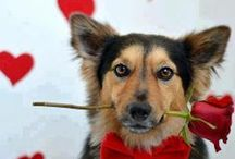 Doggy Love & Valentine's Day / Where the day of love merges with the love of dogs!