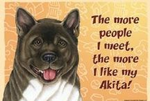 Akita Dog Lover / Everything you love about the Akita!