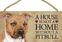 PitBull Dog Lover / Everything you Love About the PitBull!