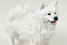 American Eskimo Dog Lover / Everything you love about the American Eskimo