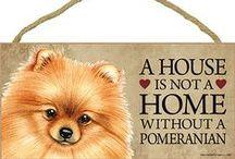 Pomeranian Dog Lover / Everything you love about the Pomeranian!