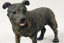 Staffordshire Terrier (Bull & American) / Everything you love about the Staffie!