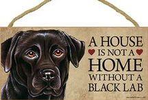 Black Lab Dog Lover / Everything you love about the Black Labrador Retriever!