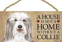 Bearded Collie Dog Lover / Everything you love about the Bearded Collie!