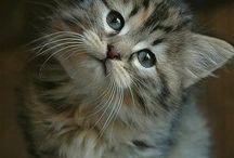 Kittens / Kittens / by Susan Fris