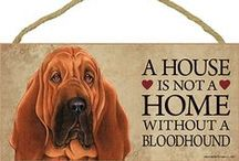 Bloodhound Dog Lover / Everything you love about the Bloodhound!