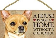 Chihuahua Dog Lover / Everything you love about the Chihuahua!