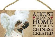 Chinese Crested Dog Lover / Everything you love about the Chinese Crested!