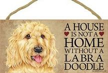 Labradoodle Dog Lover / Everything you love about the Labradoodle!