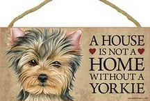 Yorkie Dog Lover / Everything you love about the Yorkie - including yorkie gifts, pictures, artwork, and more!
