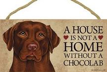 Chocolate Lab Dog Lover / Everything you love about the Chocolate Lab!