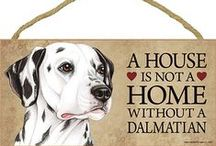 Dalmatian Dog Lover / Everything you love about the Dalmatian!