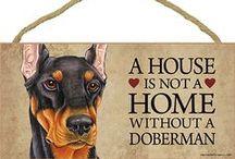 Doberman Pinscher Dog Lover / Everything you love about the Doberman Pinscher